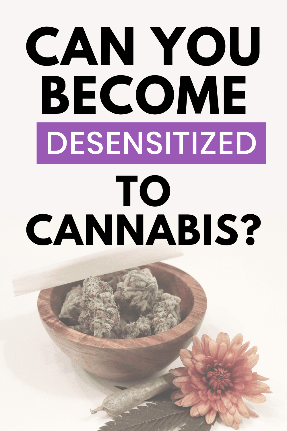 Can You Become Desensitized to Cannabis?