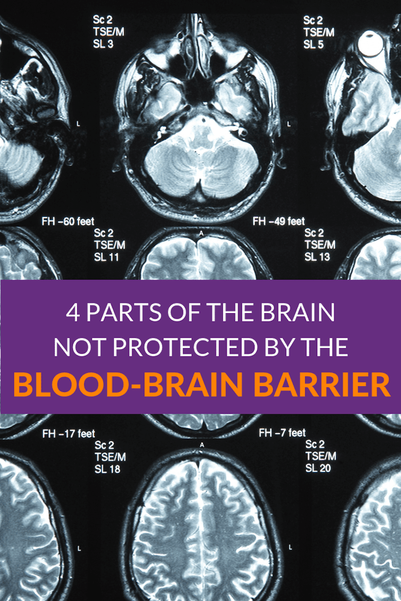 4 Parts of the Brain Not Protected by the Blood-Brain Barrier