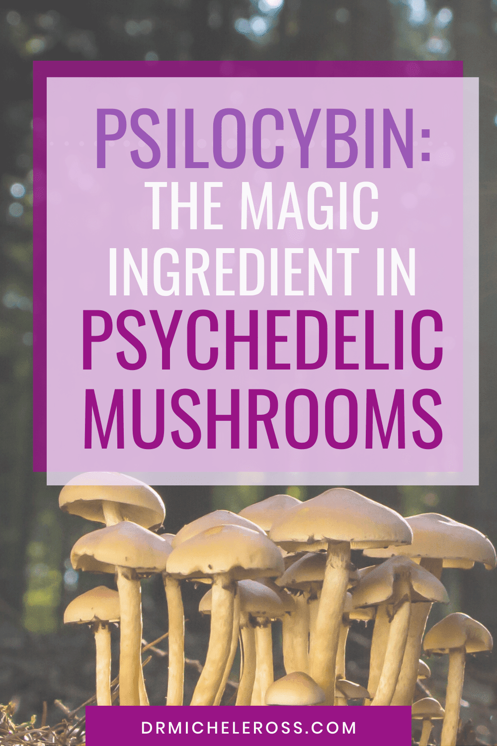 Psilocybin: The Magic Ingredient in Psychedelic Mushrooms
