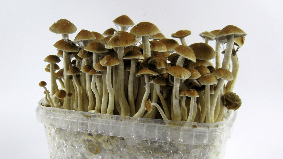 effects of psilocybin from magic mushrooms