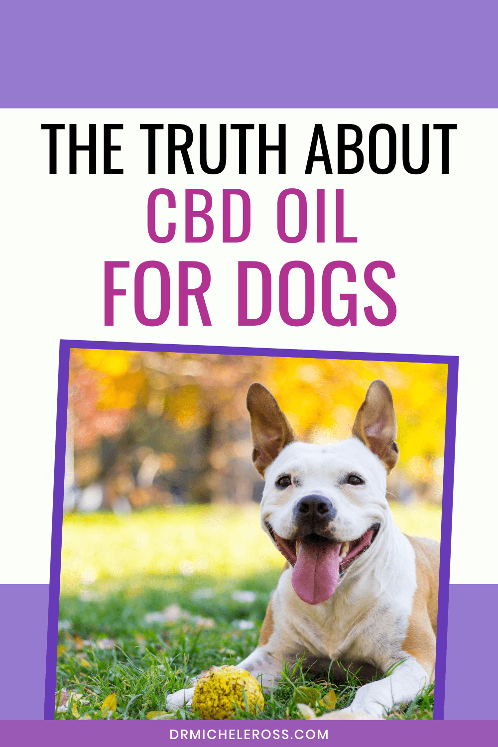 The Truth About CBD Oil for Dogs