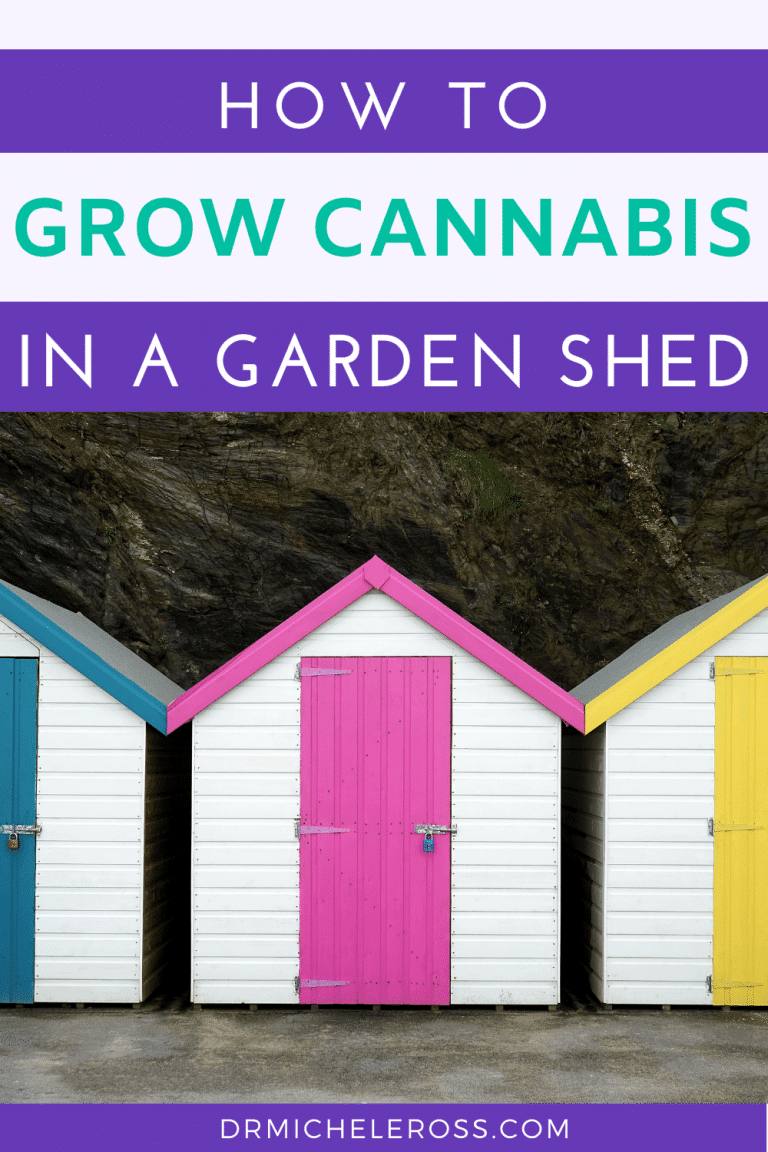 How To Grow Cannabis In A Garden Shed