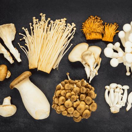 medicinal mushrooms plant medicine quiz